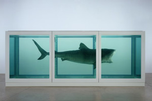 The Physical Impossibility of Death in the Mind of Someone Living (1991) di Damien Hirst